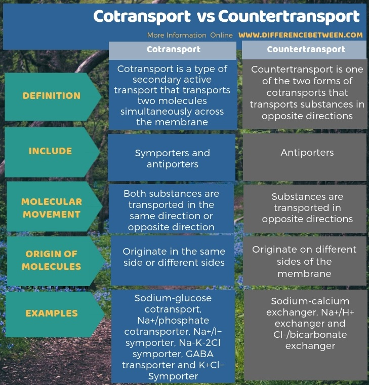 Difference Between Cotransport and Countertransport in Tabular Form