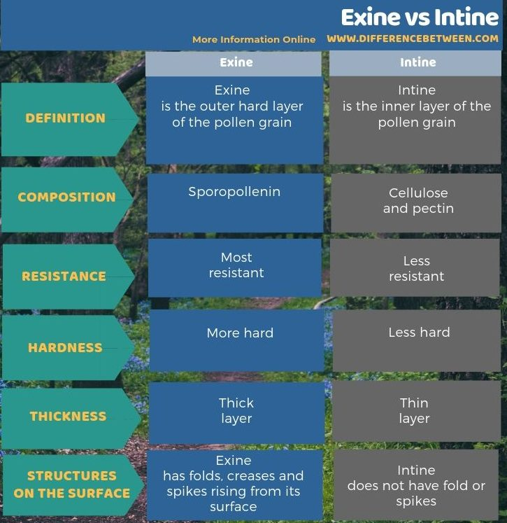 Difference Between Exine and Intine in Tabular Form