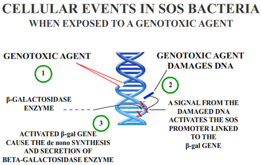 Difference Between Genotoxicity and Mutagenicity