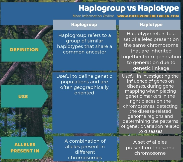 Difference Between Haplogroup and Haplotype in Tabular Form