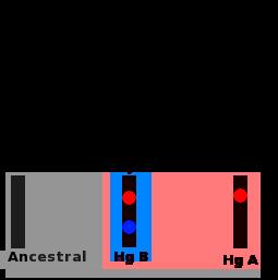 Difference Between Haplogroup and Haplotype