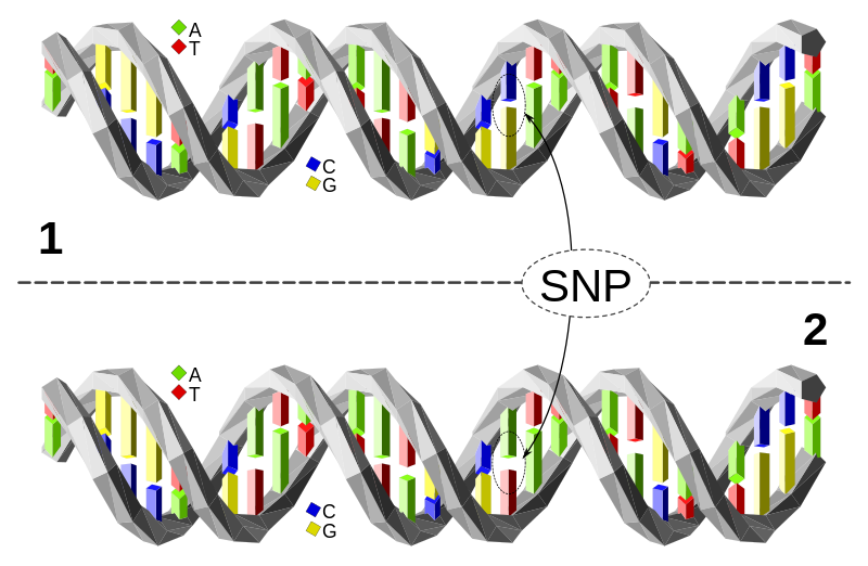 Key Difference - Haplogroup vs Haplotype