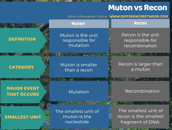 Difference Between Muton and Recon - Tabular Form