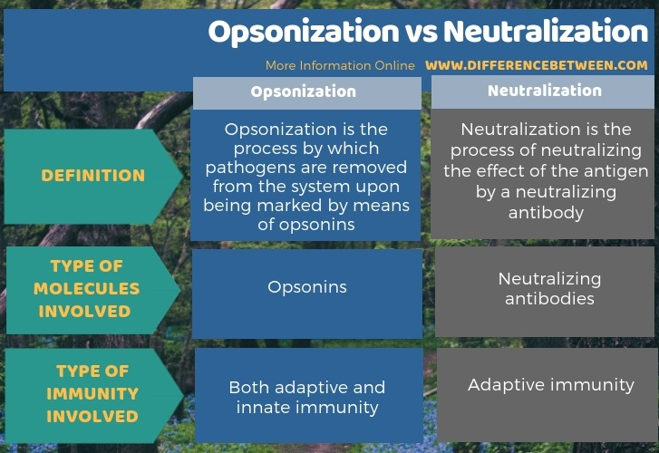 Difference Between Opsonization and Neutralization in Tabular Form