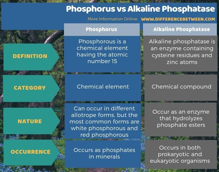 Difference Between Phosphorus and Alkaline Phosphatase in Tabular Form
