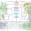 Difference Between Rhizosphere and Phyllosphere