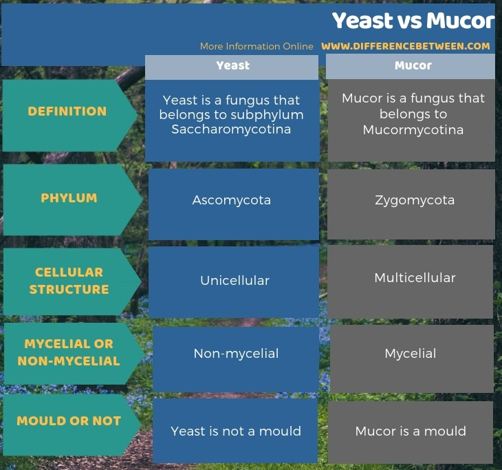 Difference Between Yeast and Mucor in Tabular Form