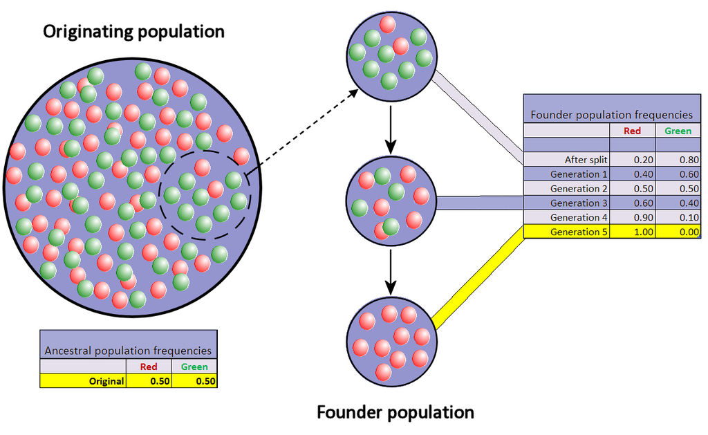 Difference Between Founder Effect and Genetic Drift