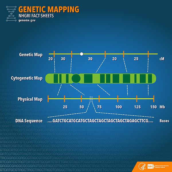 Key Difference - Genetic Map vs Linkage Map