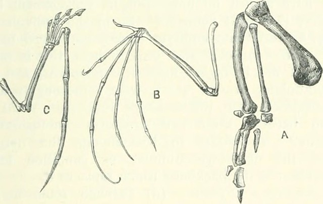 Difference Between Homologous Structures and Vestigial Structures