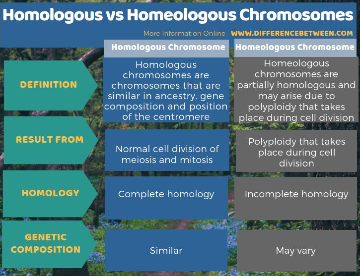 Difference Between Homologous and Homeologous Chromosomes - Tabular Form