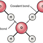 Difference Between Hydrogen Bond Donor and Acceptor