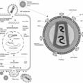 Difference Between Provirus and Retrovirus