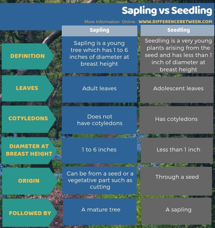 Difference Between Sapling and Seedling - Tabular Form