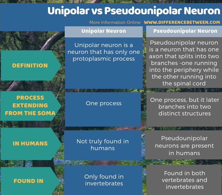 Difference Between Unipolar and Pseudounipolar Neuron - Tabular Form