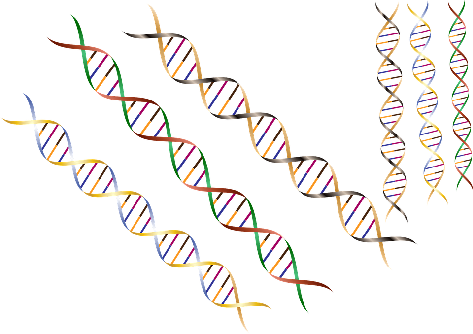 Main Difference - ssDNA vs dsDNA