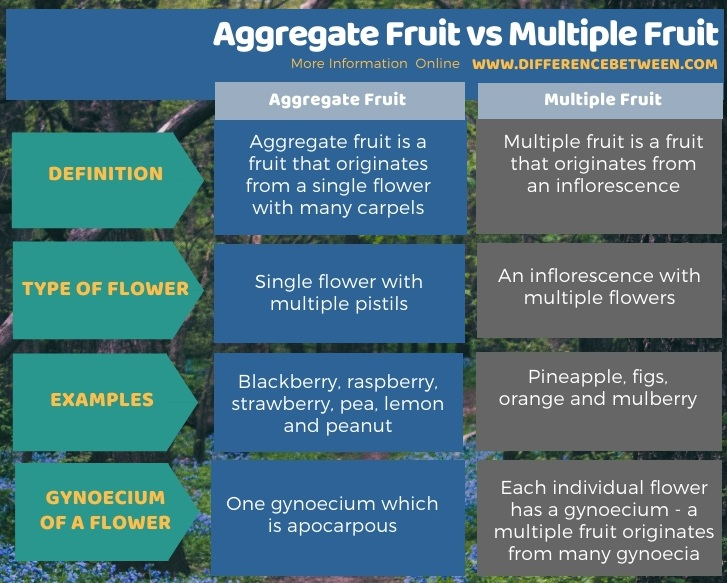 Difference Between Aggregate Fruit and Multiple Fruit in Tabular Form