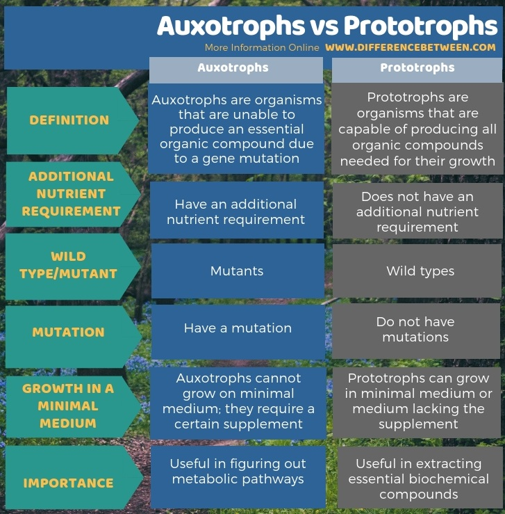 Difference Between Auxotrophs and Prototrophs in Tabular Form