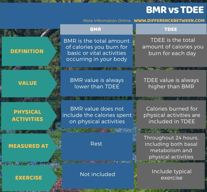 Difference Between BMR and TDEE in Tabular Form