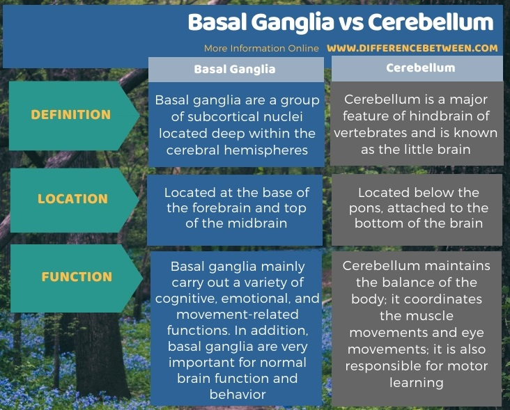 Difference Between Basal Ganglia and Cerebellum in Tabular Form