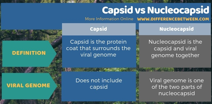Difference Between Capsid and Nucleocapsid in Tabular Form