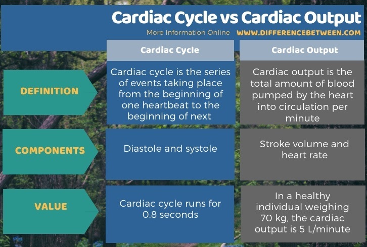 Difference Between Cardiac Cycle and Cardiac Output in Tabular Form