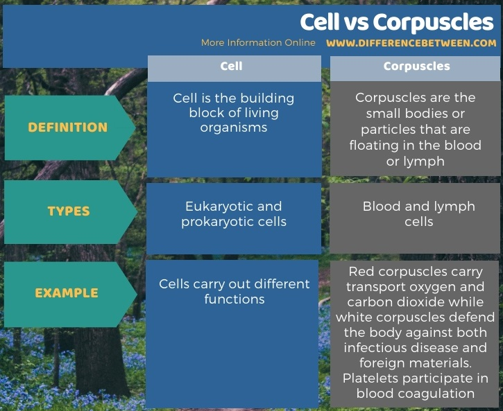 Difference Between Cell and Corpuscles in Tabular Form