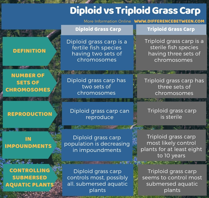Difference Between Diploid and Triploid Grass Carp in Tabular Form