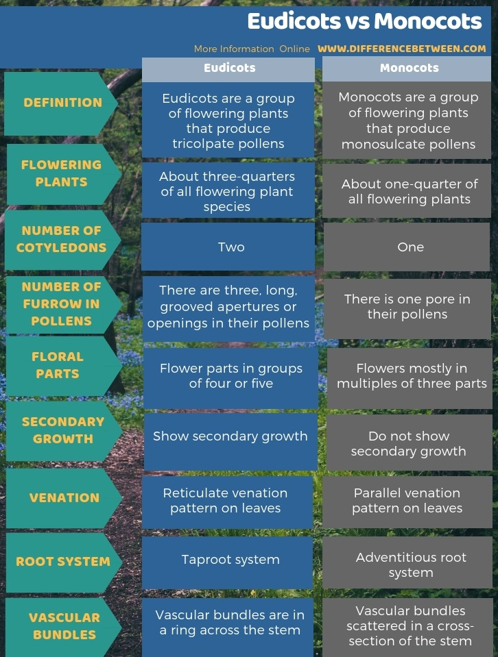 Difference Between Eudicots and Monocots in Tabular Form