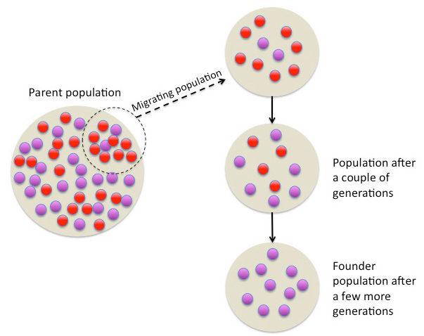 Key Difference - Founder Effect vs Bottleneck Effect