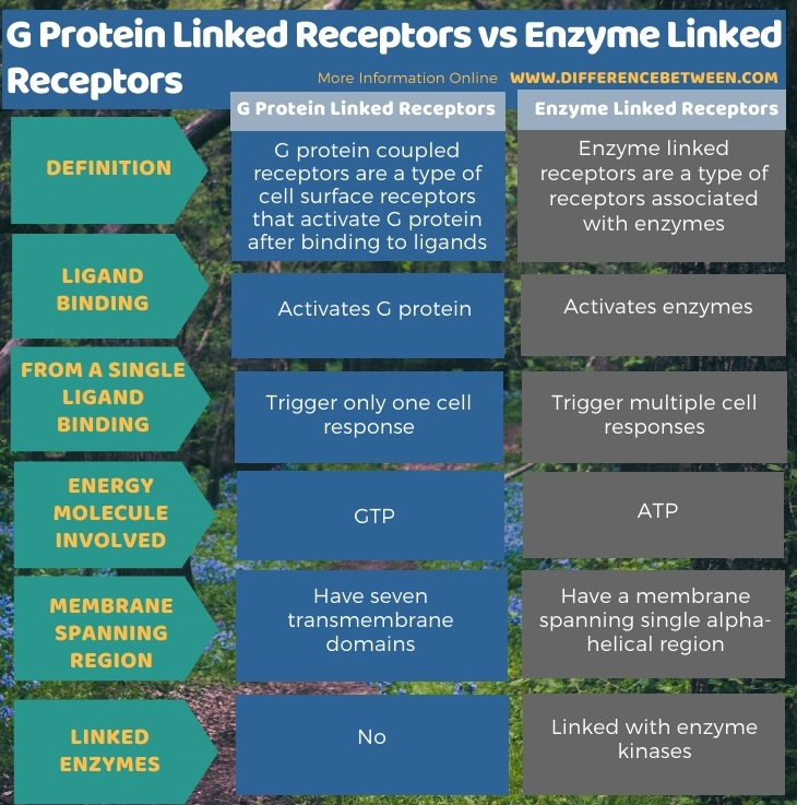 Difference Between G Protein Linked Receptors And Enzyme