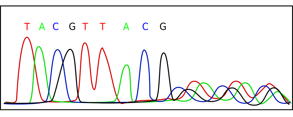 Difference Between Gene Mapping and Gene Sequencing ... on gene editing, gene concept map, gene technology, gene identification, gene testing, gene science, gene cloning, gene biology, gene drawing, gene linkage,