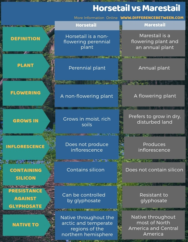 Difference Between Horsetail and Marestail in Tabular Form