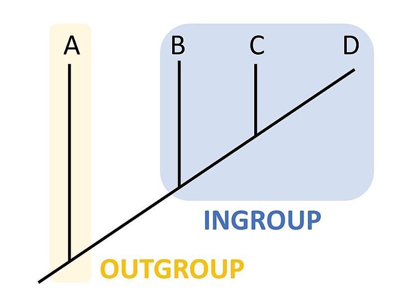 Difference Between Ingroup and Outgroup in Biology