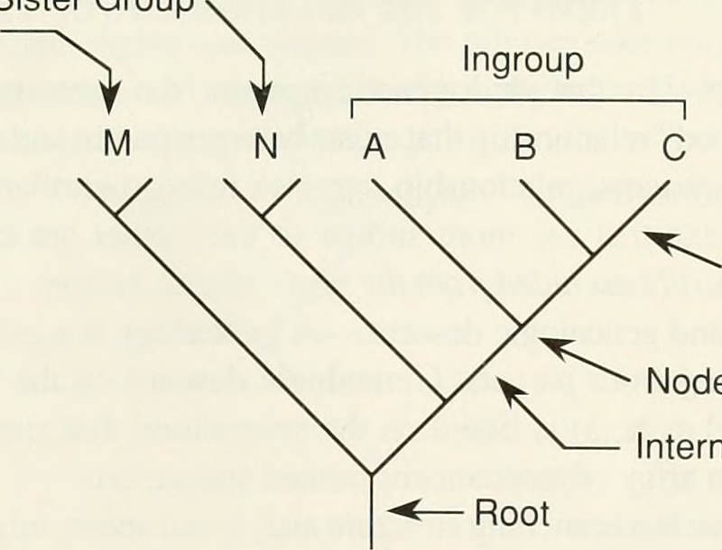 Key Difference - Ingroup vs Outgroup in Biology