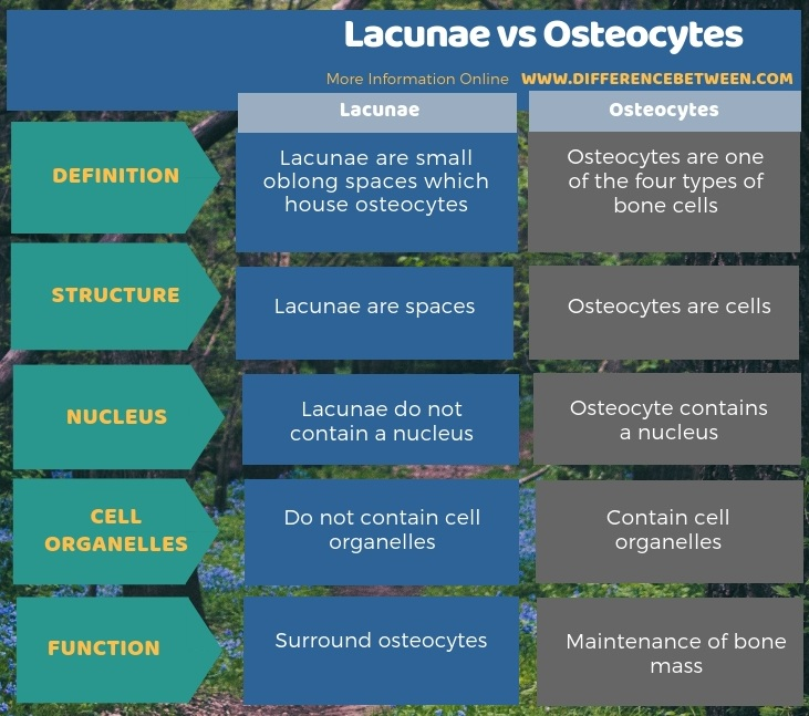 Difference Between Lacunae and Osteocytes in Tabular Form
