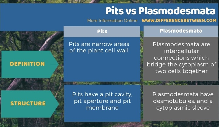 Difference Between Pits and Plasmodesmata in Tabular Form