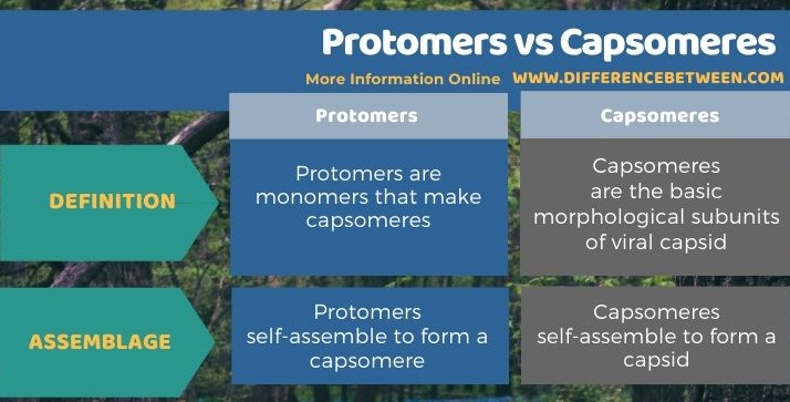 Difference Between Protomers and Capsomeres in Tabular Form