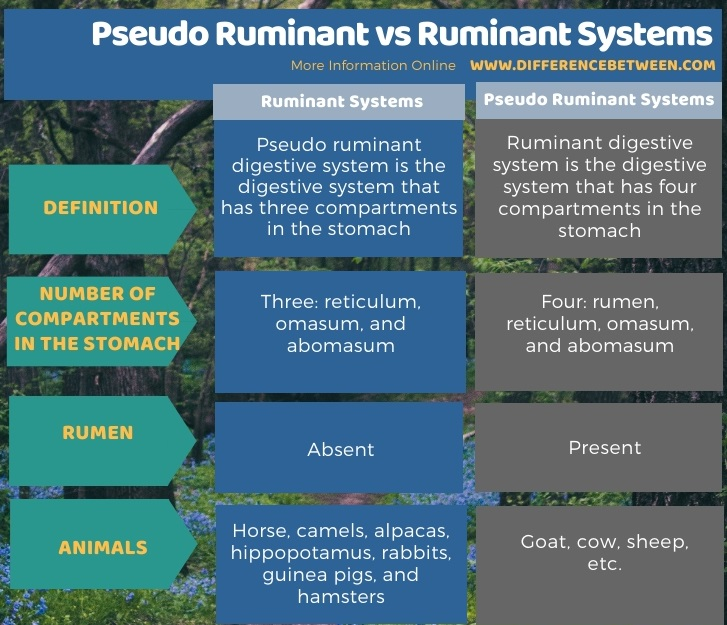 Difference Between Pseudo Ruminant and Ruminant Systems in Tabular Form