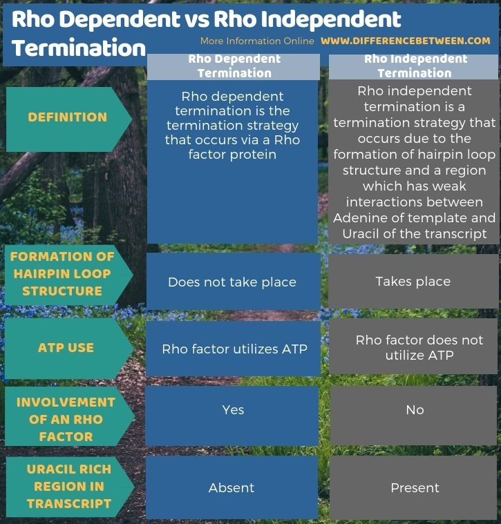 Difference Between Rho Dependent and Rho Independent Termination in Tabular Form