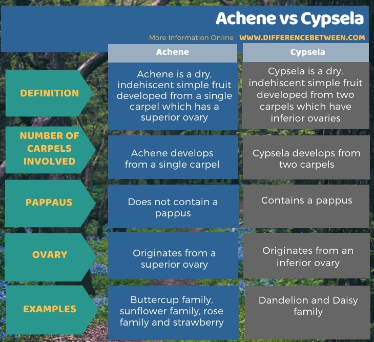 Difference Between Achene and Cypsela in Tabular Form