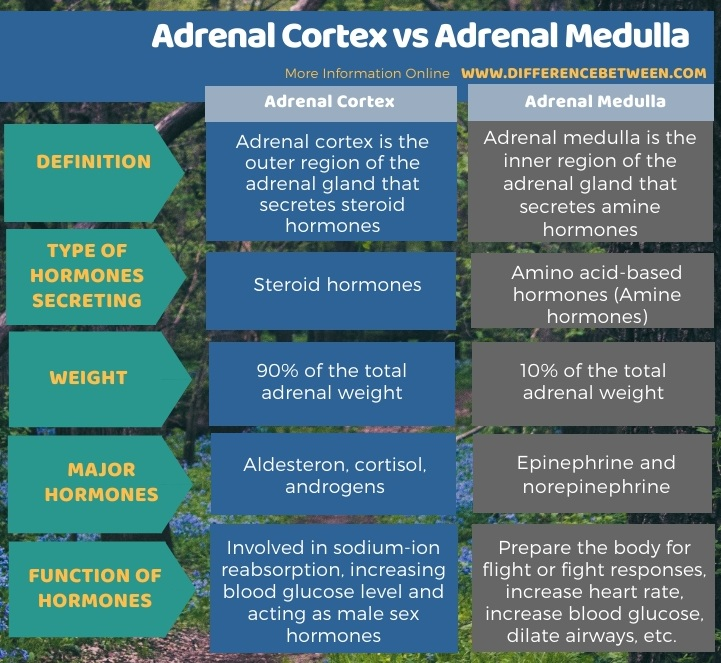 Difference Between Adrenal Cortex and Adrenal Medulla in Tabular Form