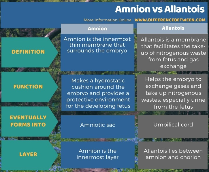 Difference Between Amnion and Allantois in Tabular Form