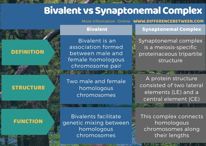 Difference Between Bivalent and Synaptonemal Complex in Tabular Form