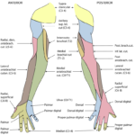 Difference Between Dermatome and Cutaneous Innervation
