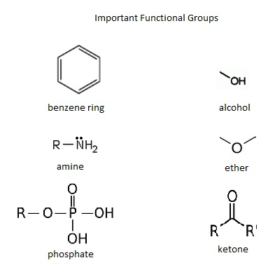 Key Difference - Functional Group vs Substituent