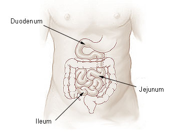 Key Difference - Ilium vs Ileum