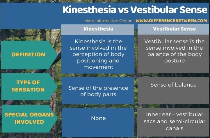 Difference Between Kinesthesia and Vestibular Sense in Tabular Form