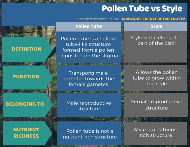 Difference Between Pollen Tube and Style in Tabular Form