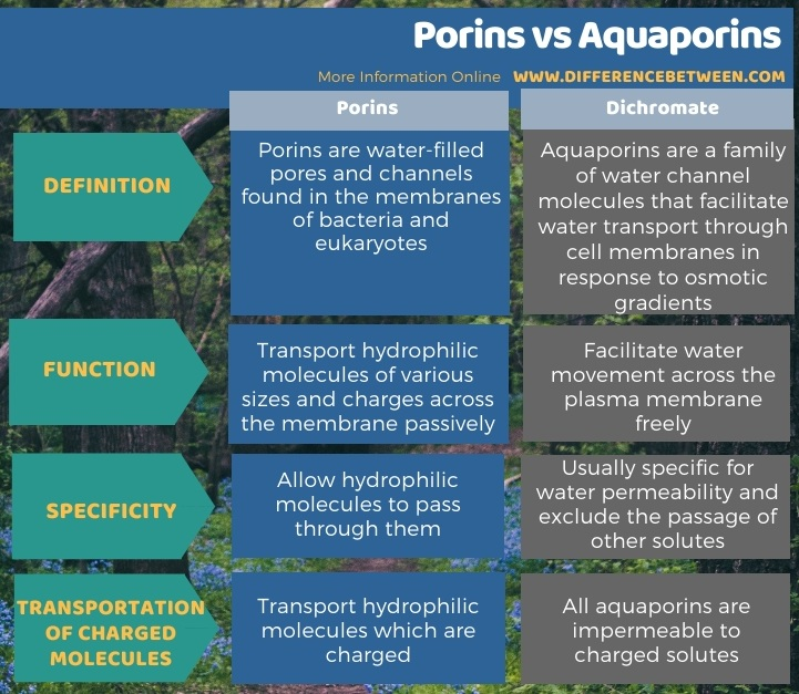 Difference Between Porins and Aquaporins in Tabular Form